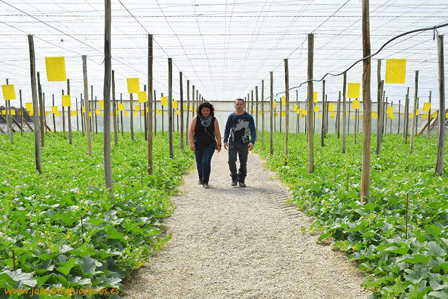 Felicia Salazar, técnico de SAMA; Gabriel Maleno, productor de melón amarillo de El Ejido, Almería, invernaderos