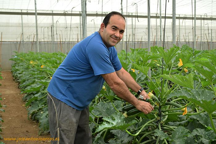 agricultor de El Ejido de calabacín, SAMA, Sinatra, invernaderos, Almería
