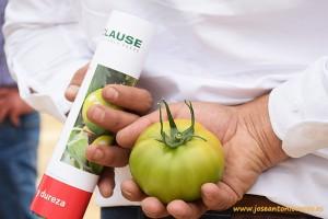 Cabrera es un tomate beef tanto para otoño como para primavera.