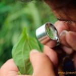 Abierto el plazo de ayudas para control biológico