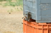 Abierto el plazo de ayudas a la apicultura para 2016