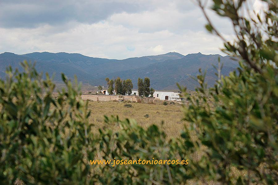 (vídeo) El olivar ecológico de la finca 'El Maltés'