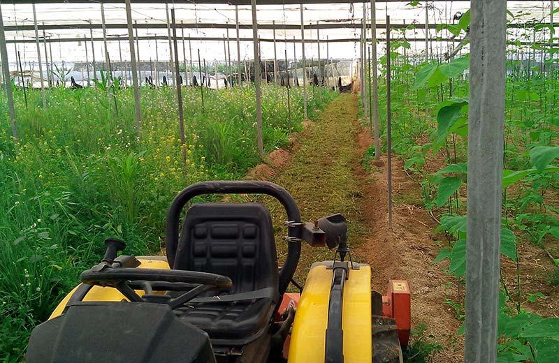 Agricultura-ecológica-con-Jesus-Rincon