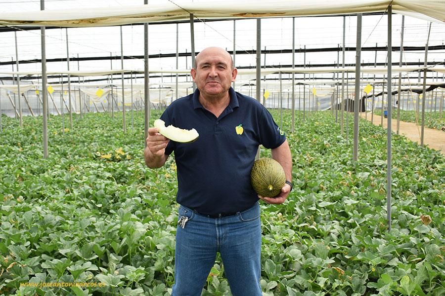Haciendo screening de melón con Enza Zaden