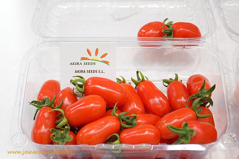 Nuevo tomate cherry pera de Akira Seeds.