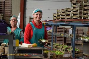 Trabajadoras de CASI en el almacén de manipulado de tomate del aeropuerto de Almería