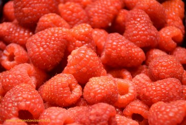 ZERYA germina en Portugal de la mano de Special Fruit