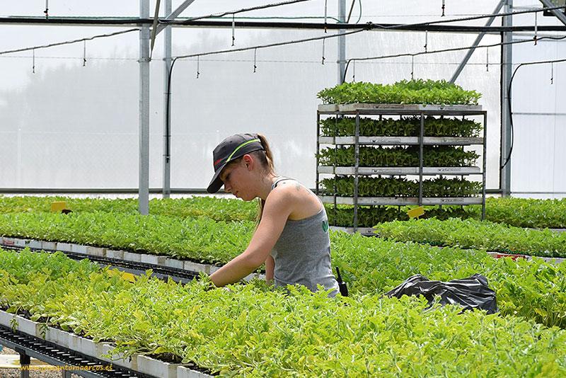 El Plantel Semilleros trabaja en primavera en su delegación de Ciudad Real los cultivos de melón piel de sapo y sandía
