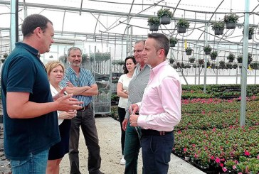Viveros Naturplant, dipladenia e hibisco para exportación