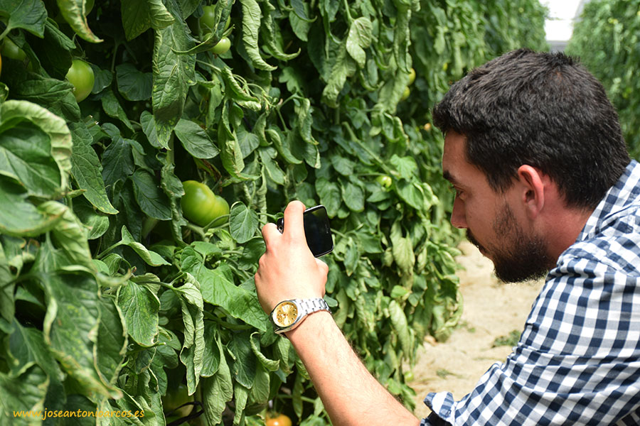 Publicada la resolución de jóvenes agricultores