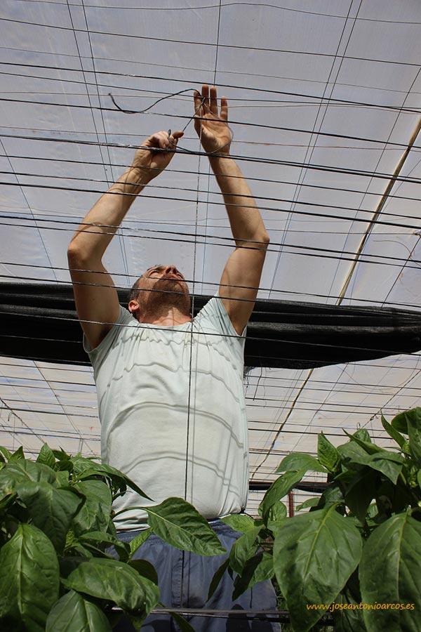 Jornalero en un invernadero de Adra. Trabajadores del campo almeriense