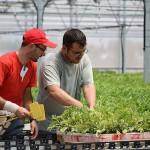 Cultivos de melón y sandía en La Mancha. (vídeo) El Plantel Semilleros