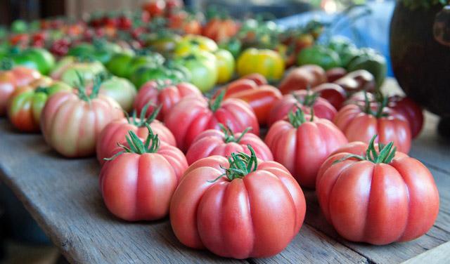 Tomate-Monterosa-de-Semillas-Fito