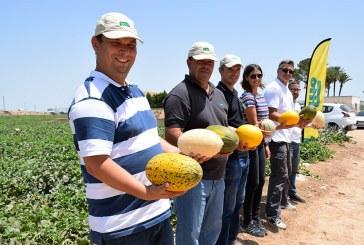 Los melones al aire libre de Fitó (vídeo)
