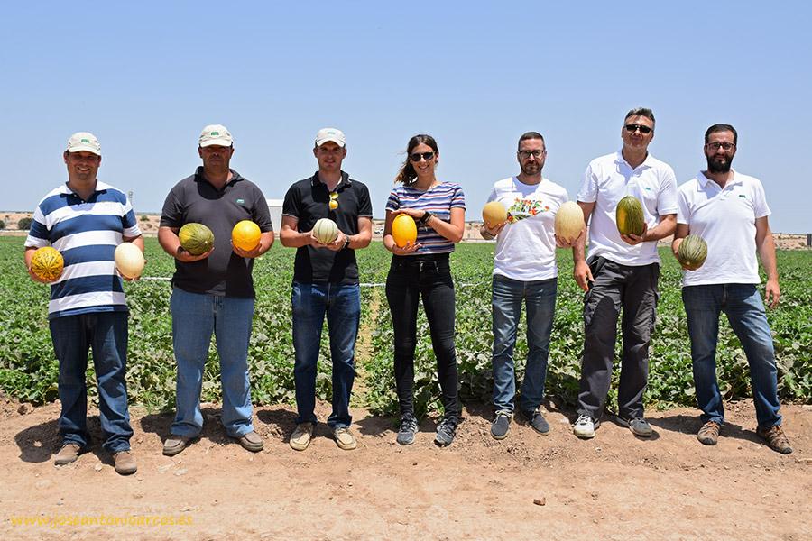 Fitó lidera el mercado global de melón amarillo. Campo de ensayos de Cartagena