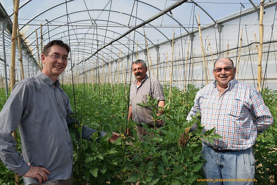 Los invernaderos del río Alberche. Tomate y pepino al sur de Madrid