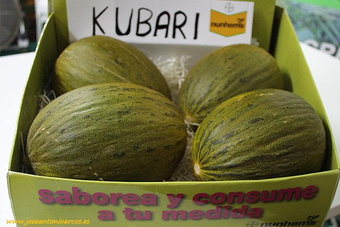 Variedad piel de sapo 'Kubari'. Melón de Nunhems