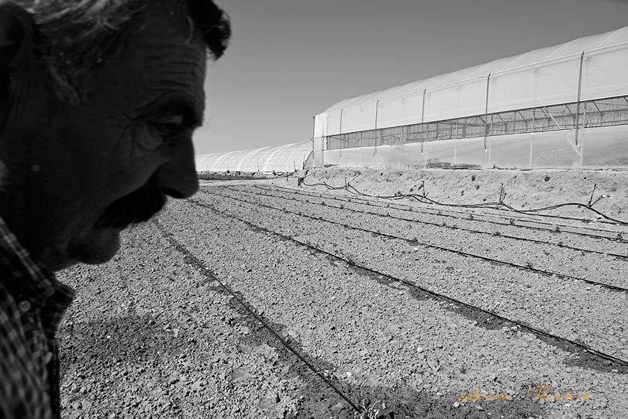 'Mondote', la simpatía de un agricultor de Madrid (vídeo)