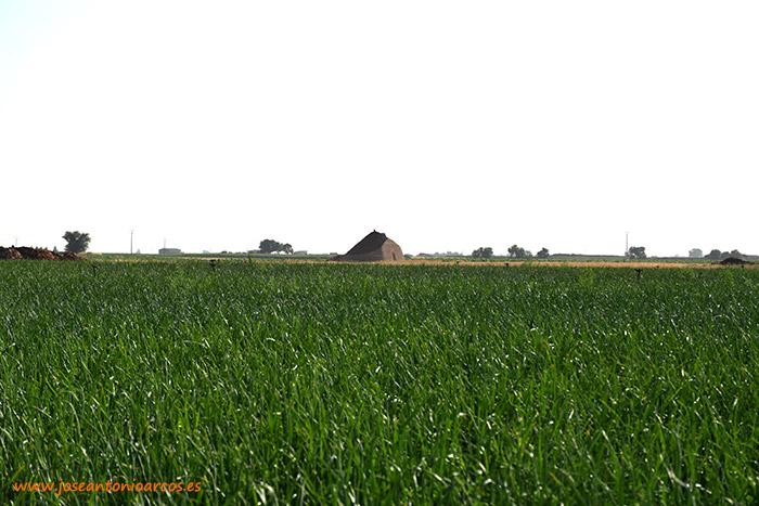 Campos de cereales en La Mancha con un bombo al fondo. Llanos del Caudillo