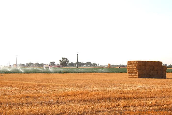 Campo de cereales y cebollas. La gran llanura manchega está llena de contrastes de color.