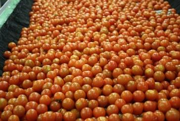 Primero fue el pimiento, ahora el tomate. Mejor lavado y más seguridad sin podridos: Citrocide® PLUS T
