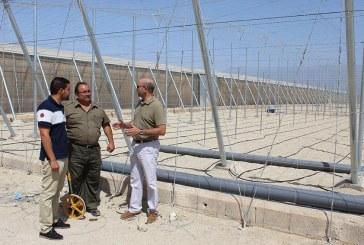 El Ejido paraliza los nuevos invernaderos que no recogen pluviales