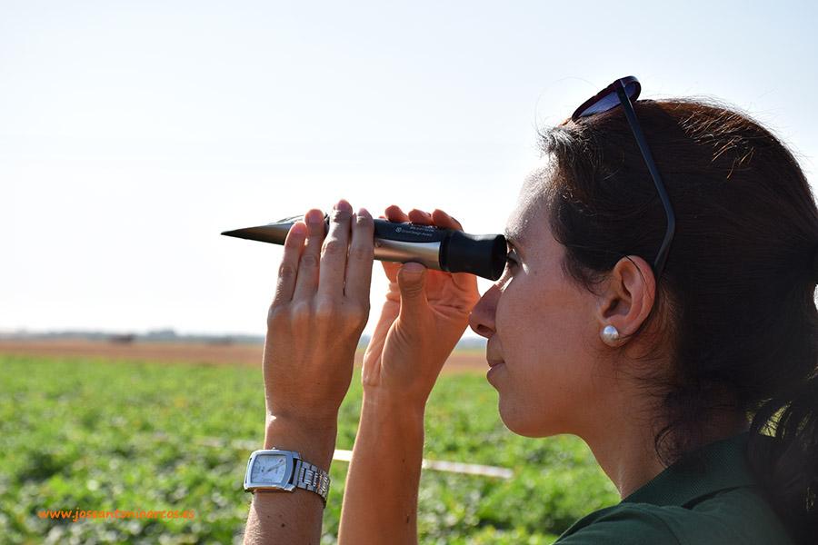 Día de campo entre melonares y campos de sandías en La Mancha (vídeo)