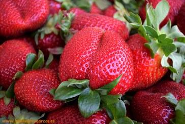 Arranca la recogida de la fresa que este año tiene el 6% menos de hectáreas