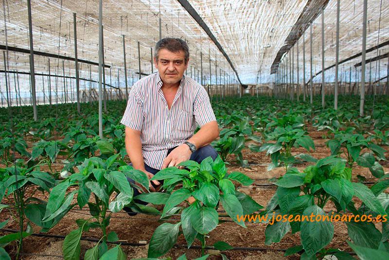 Pepe Añez, agricultor de El Ejido (Almería).