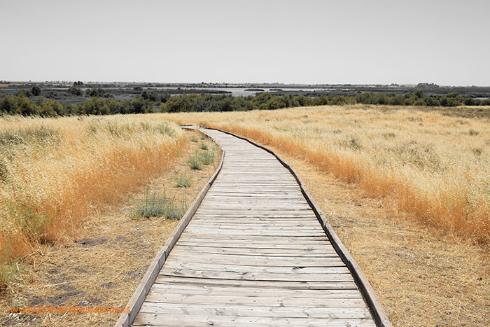 Parque-Nacional-Tablas-de-Daimiel