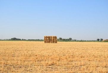 Este verano el cereal cotiza un 25% peor que hace un año