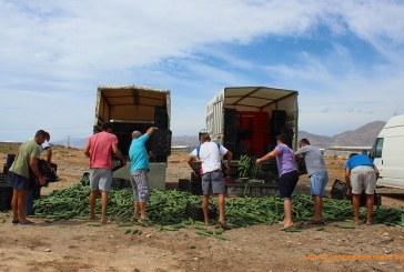 Tirada simbólica de pepinos en Almería y Granada