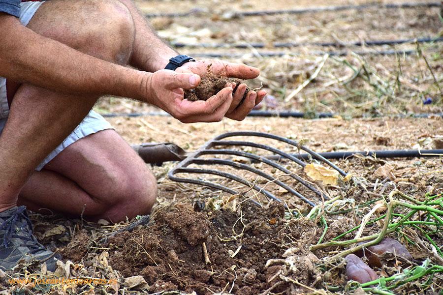 El Consejo de Gobierno andaluz anuncia un nuevo modelo revolucionario de gestión de restos vegetales
