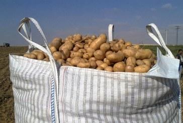 Las patatas del antiguo Reino de Castilla