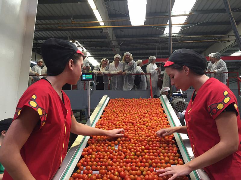 Un grupo de eurodiputados conocen el universo del cherry de La Palma