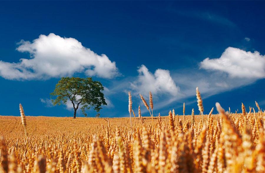 Día 16 de noviembre. El sector agroalimentario como contribuyente al cambio climático