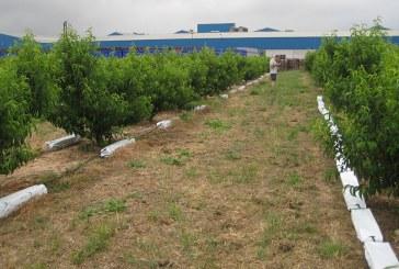 Projar traslada su hidroponía de hortícolas a frutales