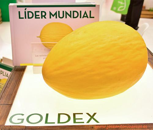 Melón 'Goldex', de Semillas Fitó. Melón amarillo cultivado en Brasil.