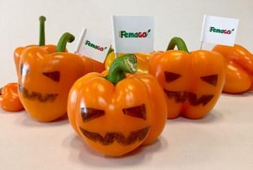Propuestas imaginativas para Halloween. Hortalizas de Femago en el Catedral