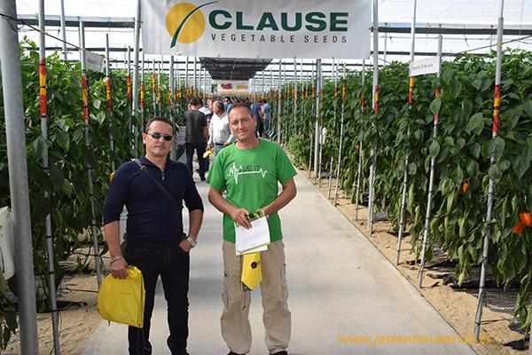 Enrique y Javier, jóvenes agricultores de Balerma (El Ejido, Almería). Californias rojos y amarillos en las jornadas de pimientos de HM Clause 2016 en invernaderos de El Ejido, Almería.