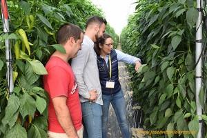 Técnicos de campo de Alhóndiga La Unión en las jornadas de pimientos de HM Clause en invernaderos de El Ejido, Almería.