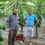 El jardín de las papayas de Castell de Ferro