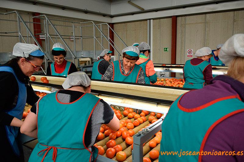 La agricultura es motor de empleo bajo el plástico, en la industria auxiliar y en los almacenes de manipulado.
