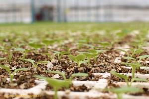 internacionalizacion-de-semilleros-y-viveros-andalucia