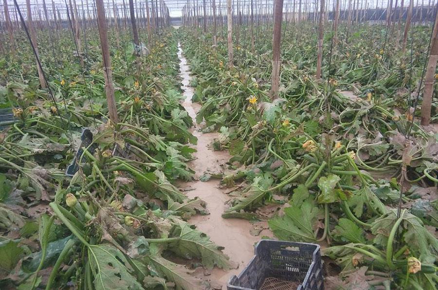 Rambla Morales se desborda y penetra en los invernaderos de Ruescas