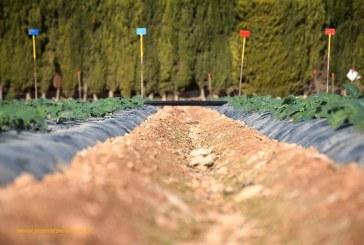 Abierto el plazo para cubrir 43 plazas de agrónomos del Estado