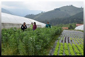 Agricultura ecológica en el País Vasco.