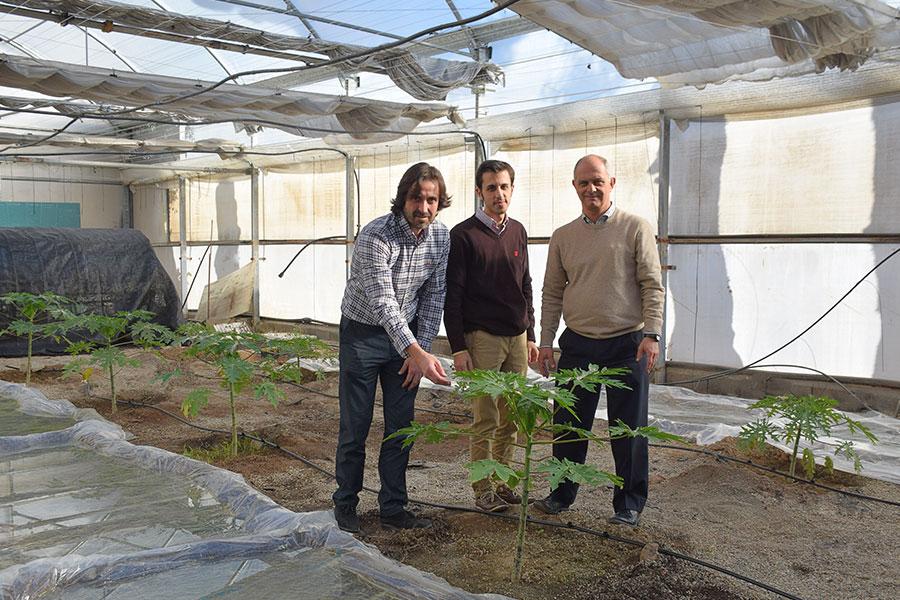 Campomar enseña a sus alumnos el cultivo de papaya