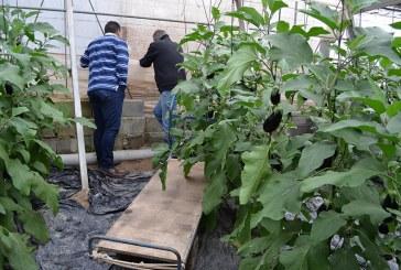 El aumento de precios lleva a más robos de hortalizas en el campo