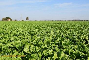 Oposiciones para agrónomos en Murcia